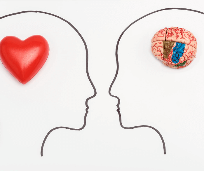 Die emotionale und die rationale Hälfte unseres Gehirns